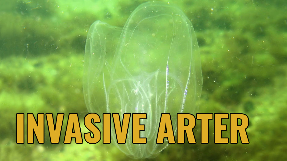 Invasive arter
